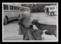 positivo Nino Rota nel Parco di Nara, 1976